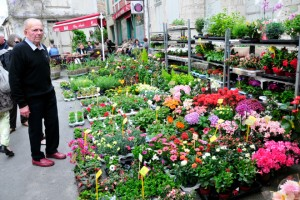 Fresh flowers at Issigeac Market